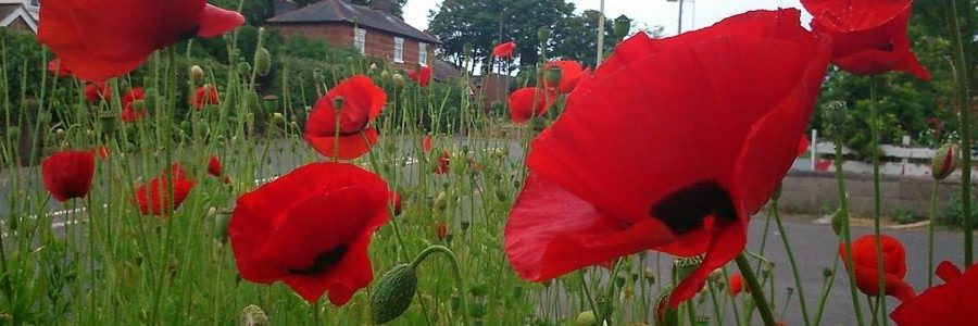 Through the poppies to Telford's old road in Nesscliffe